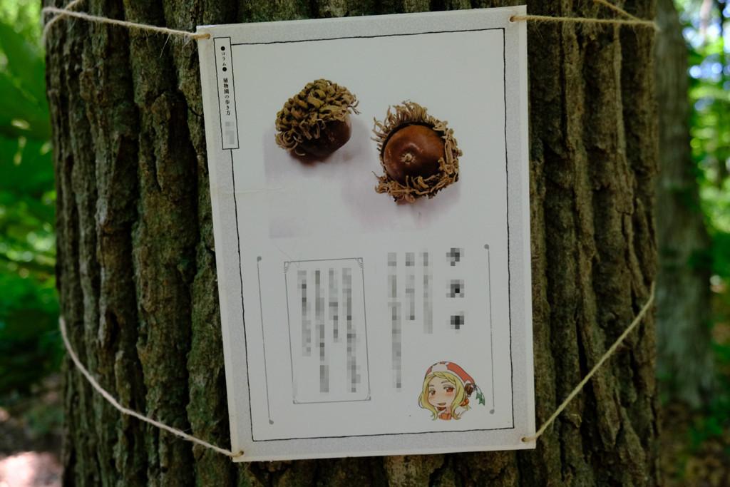 f:id:fudsuki:20180520184026j:plain