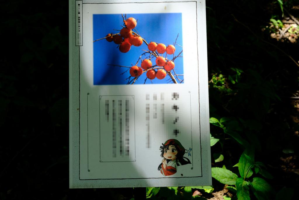 f:id:fudsuki:20180520190150j:plain
