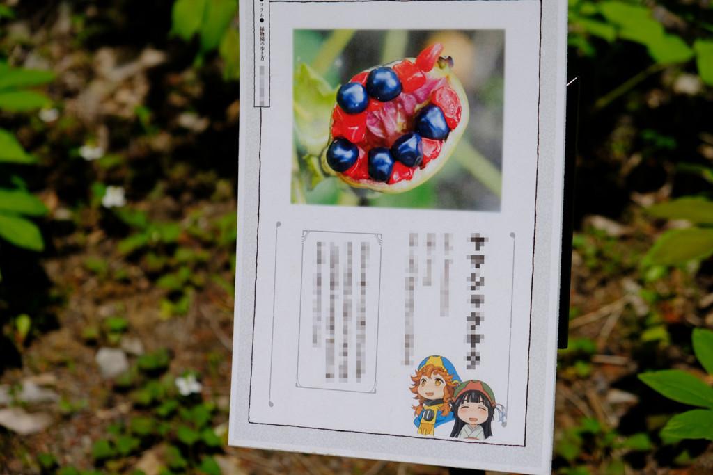 f:id:fudsuki:20180520205159j:plain