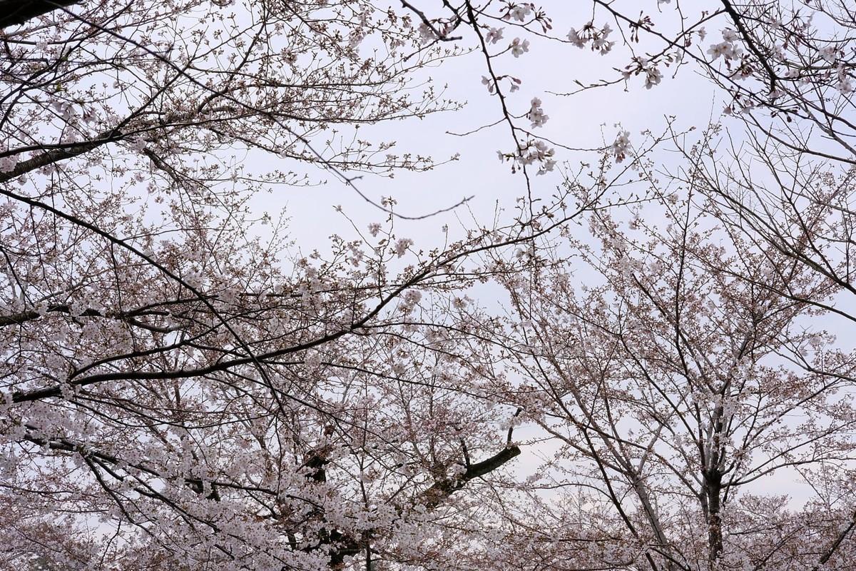 f:id:fudsuki:20190330162718j:plain
