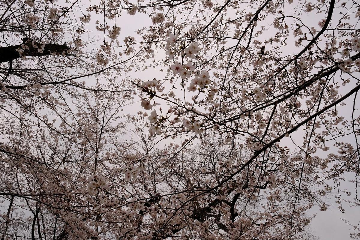 f:id:fudsuki:20190330180045j:plain
