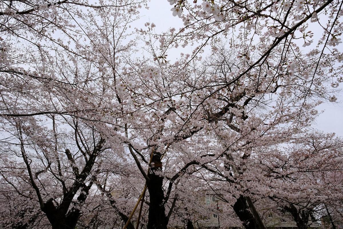 f:id:fudsuki:20190330180659j:plain