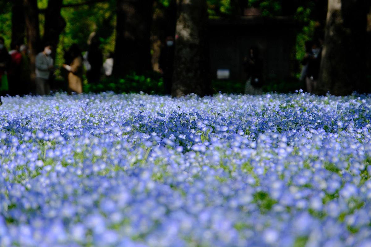 f:id:fudsuki:20210413130031j:plain