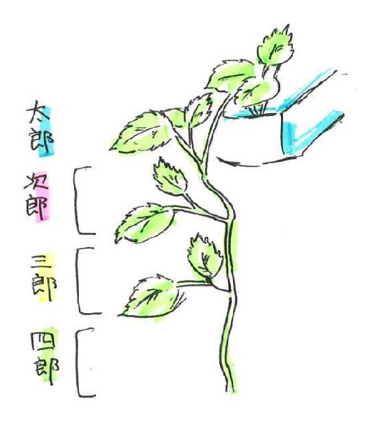 f:id:fuefuki_okoshi:20160815152148j:plain