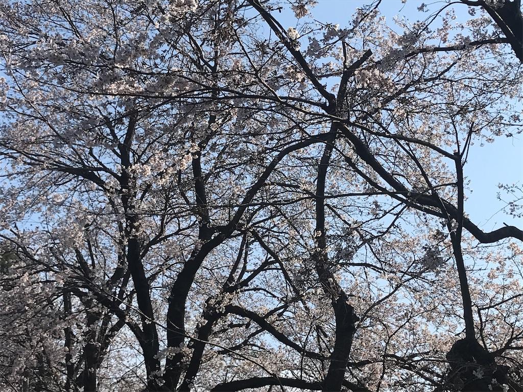 f:id:fufumama:20200326090929j:image