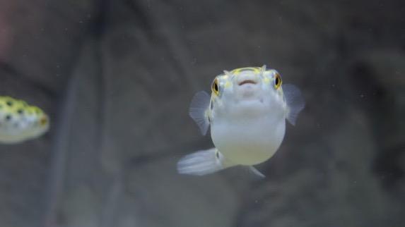 f:id:fugu-ya:20170605175428j:plain
