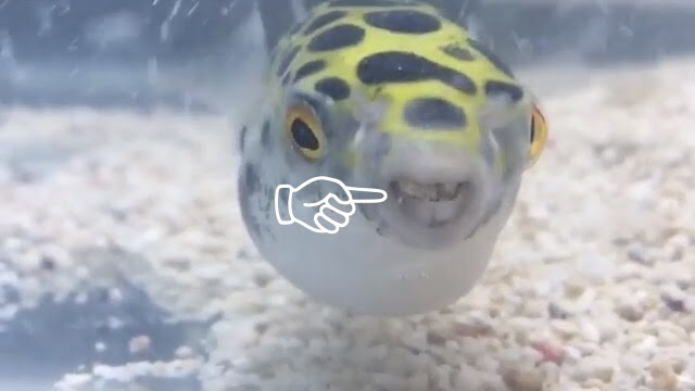 f:id:fugu-ya:20170611103655j:plain