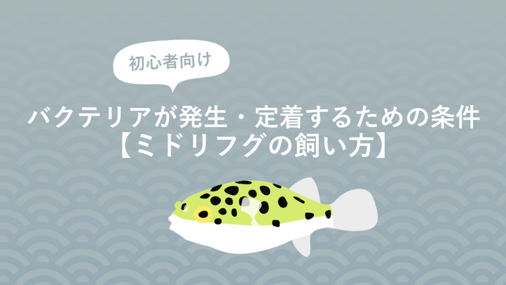 f:id:fugu-ya:20170826155708j:plain