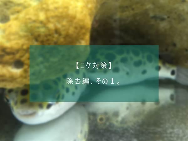 f:id:fugu-ya:20171124154329j:plain