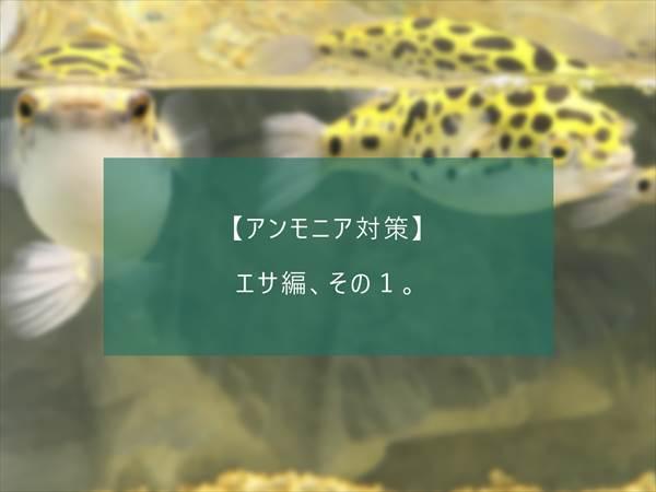 f:id:fugu-ya:20171124154333j:plain