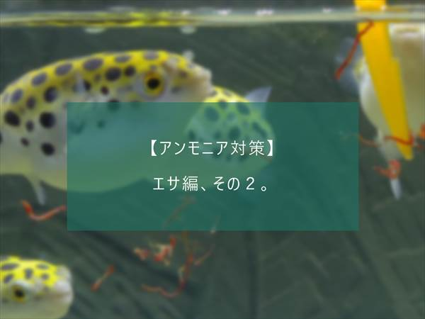 f:id:fugu-ya:20171124154337j:plain