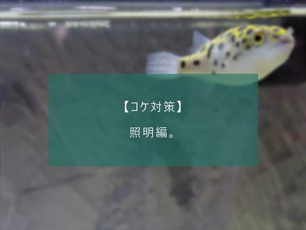 f:id:fugu-ya:20171124154408j:plain