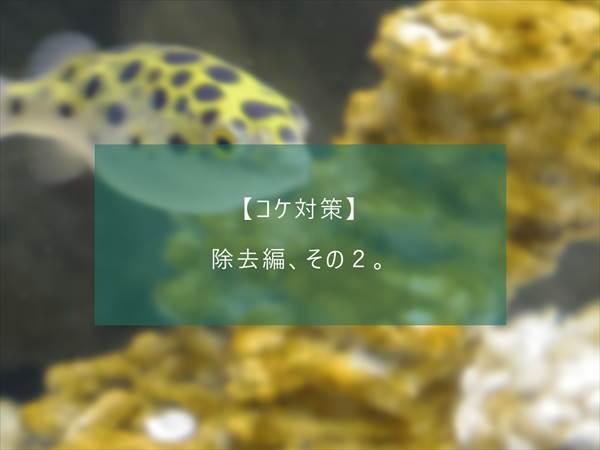 f:id:fugu-ya:20171124154415j:plain