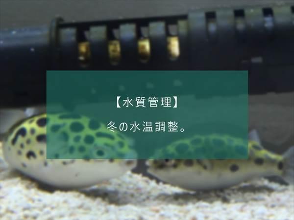f:id:fugu-ya:20171124154433j:plain