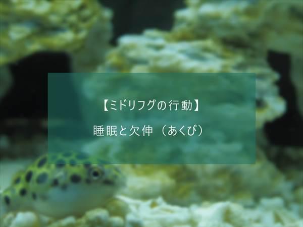 f:id:fugu-ya:20171124154440j:plain