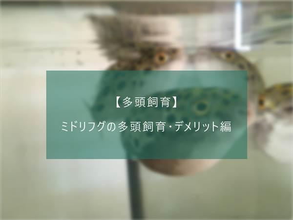f:id:fugu-ya:20171124154448j:plain