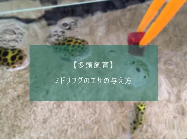 f:id:fugu-ya:20171124154510j:plain