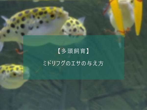 f:id:fugu-ya:20171124154513j:plain
