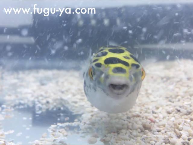 f:id:fugu-ya:20171128153348j:plain