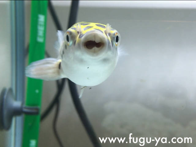 f:id:fugu-ya:20171128153351j:plain