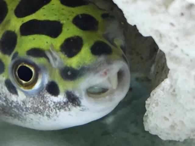 f:id:fugu-ya:20171130121833j:plain