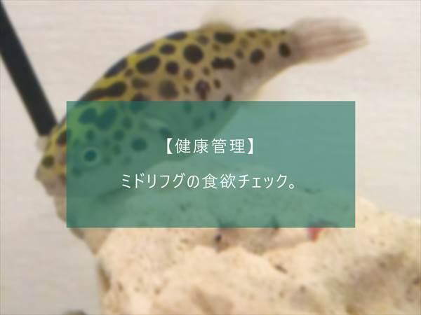 f:id:fugu-ya:20171130134851j:plain