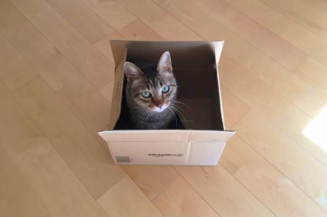 Amazonの箱に入った愛猫