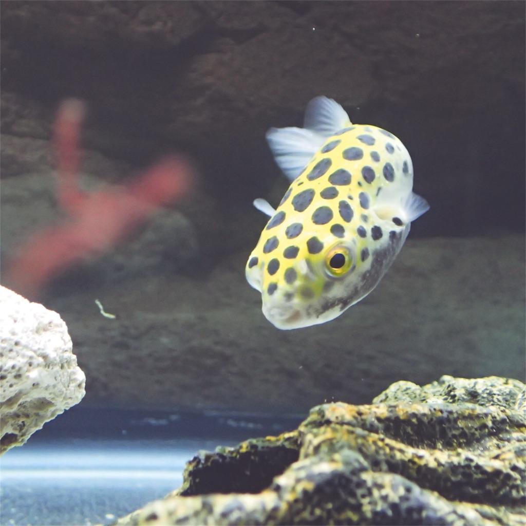 f:id:fugu-ya:20180902103658j:image
