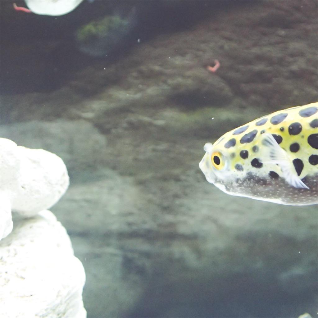 f:id:fugu-ya:20180902103728j:image