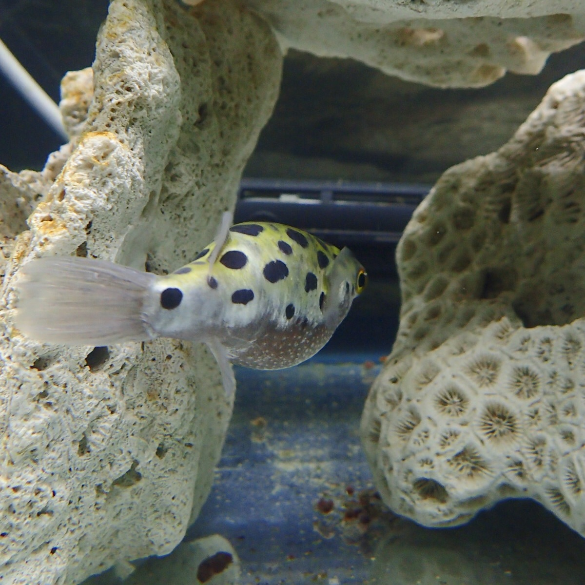 f:id:fugu-ya:20181004144529j:image