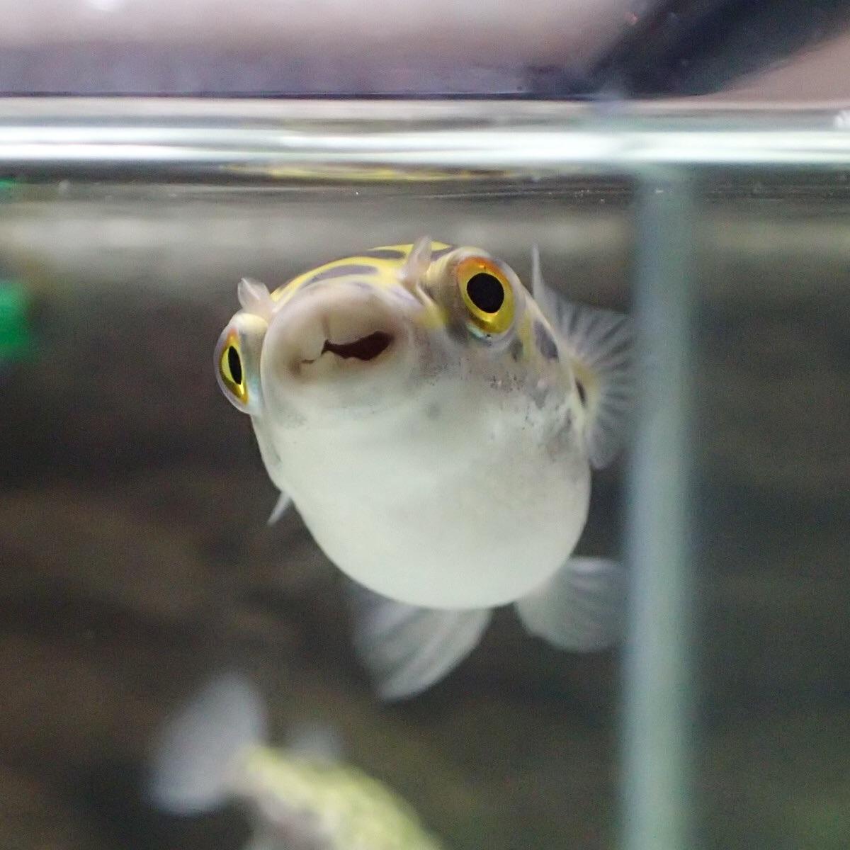 f:id:fugu-ya:20181004144542j:image
