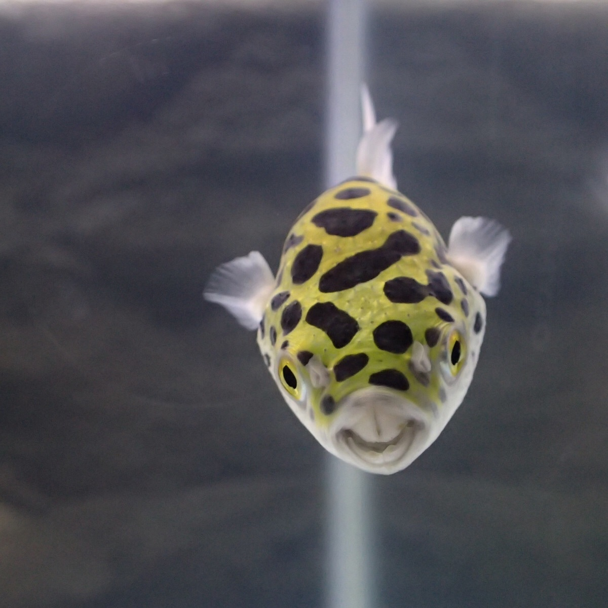 f:id:fugu-ya:20181117154431j:image