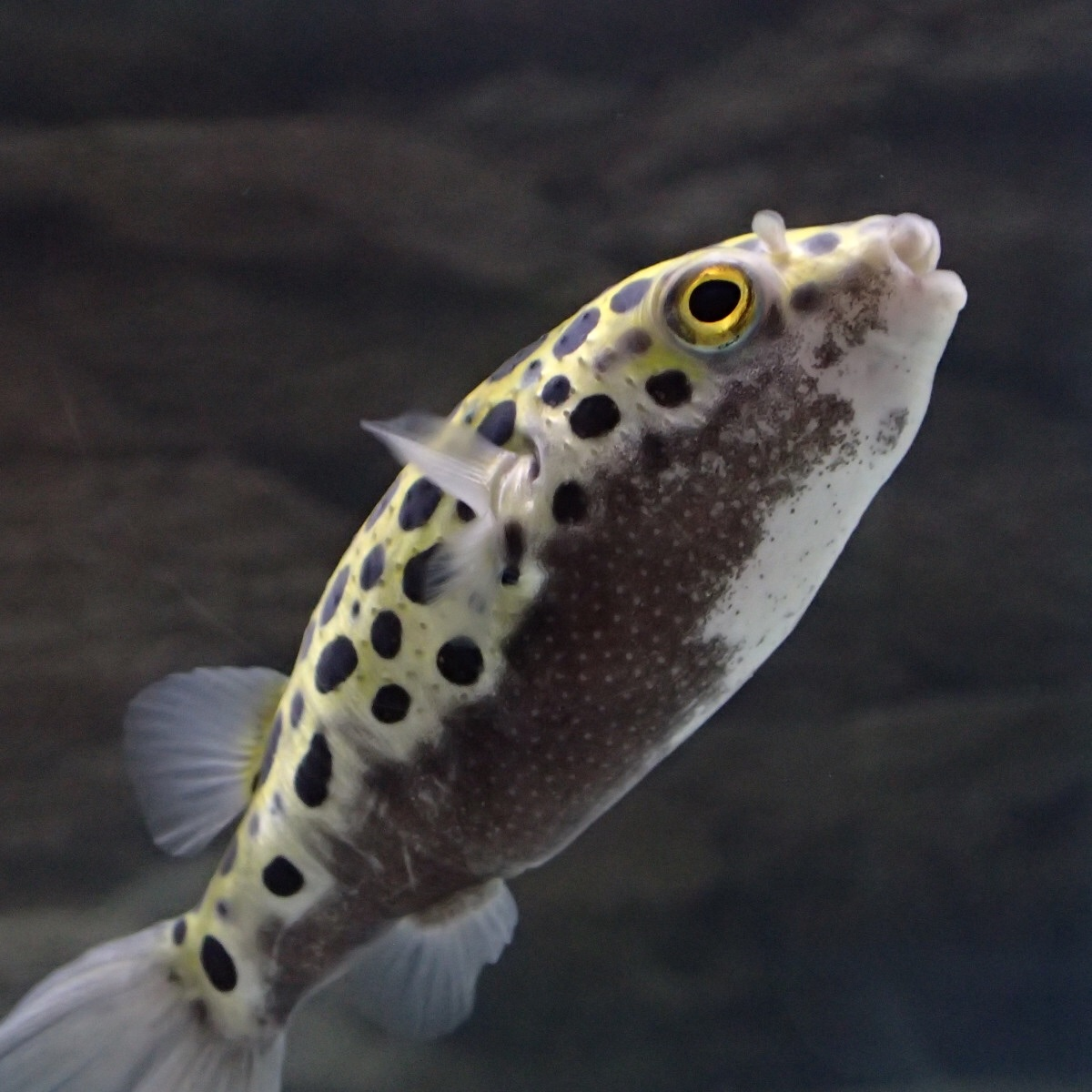 f:id:fugu-ya:20181126160149j:image