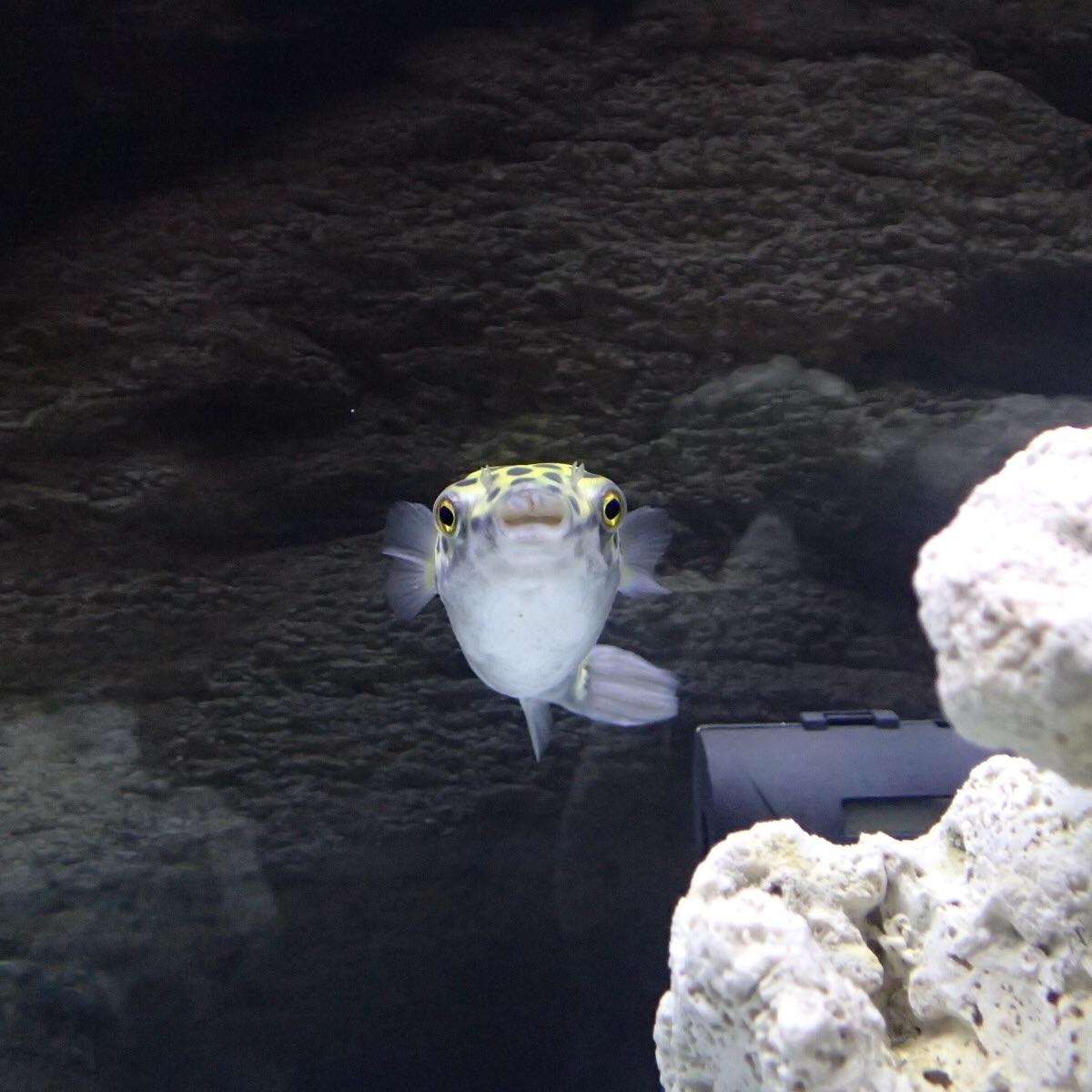 f:id:fugu-ya:20181218122642j:image
