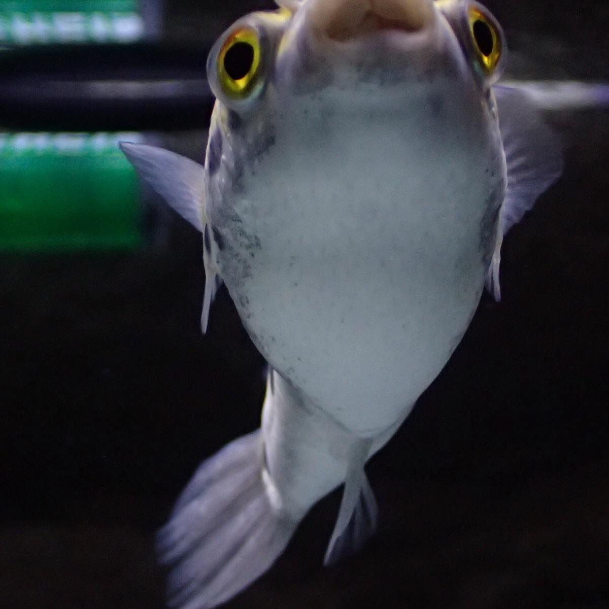 f:id:fugu-ya:20190104122157j:image