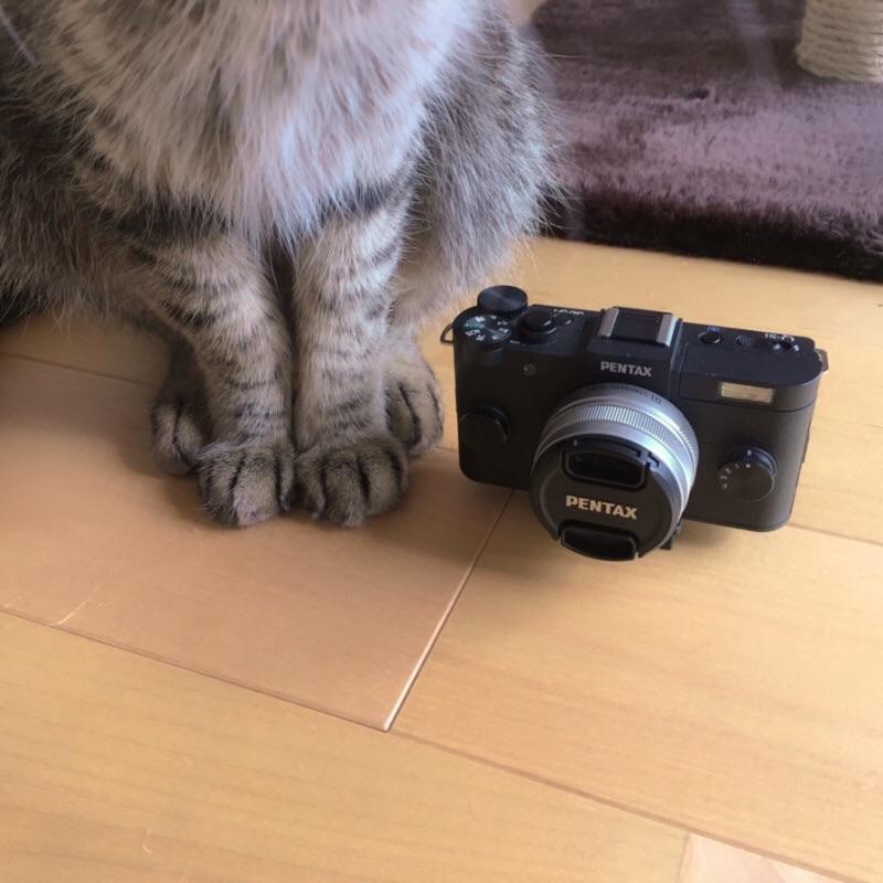 f:id:fugu-ya:20190118174042j:image