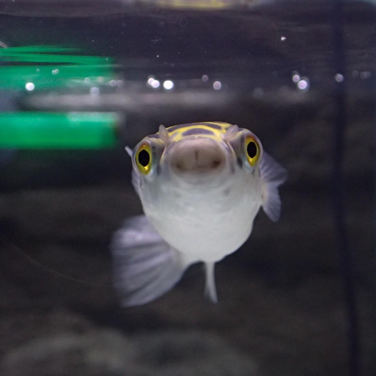 f:id:fugu-ya:20190208230423j:image