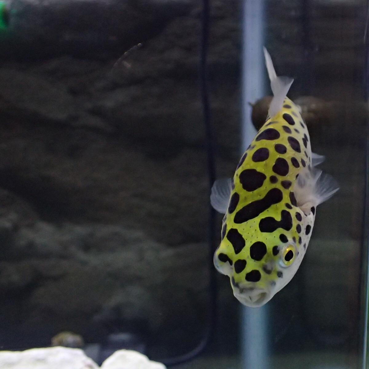 f:id:fugu-ya:20190208230609j:image