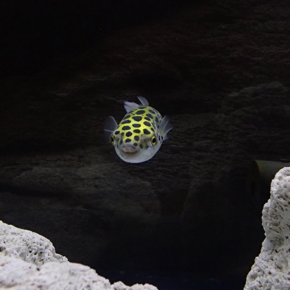f:id:fugu-ya:20190210163609j:image