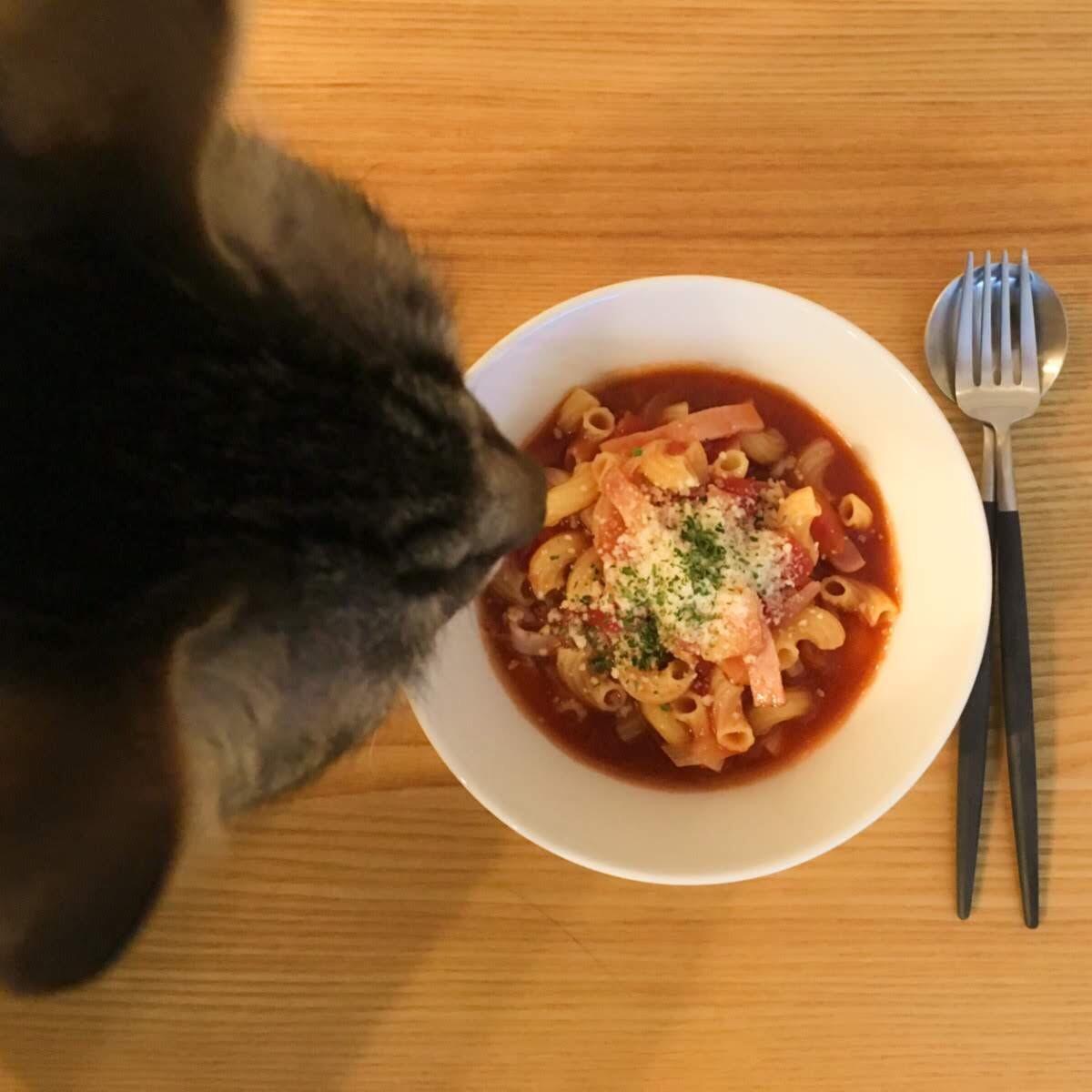 パスタにかかった粉チーズが気になり覗き込む猫