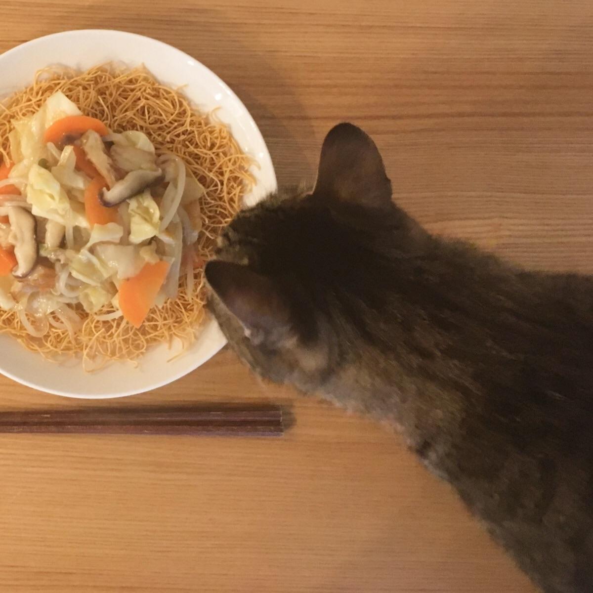 人間の食事をチェックしに来る家猫