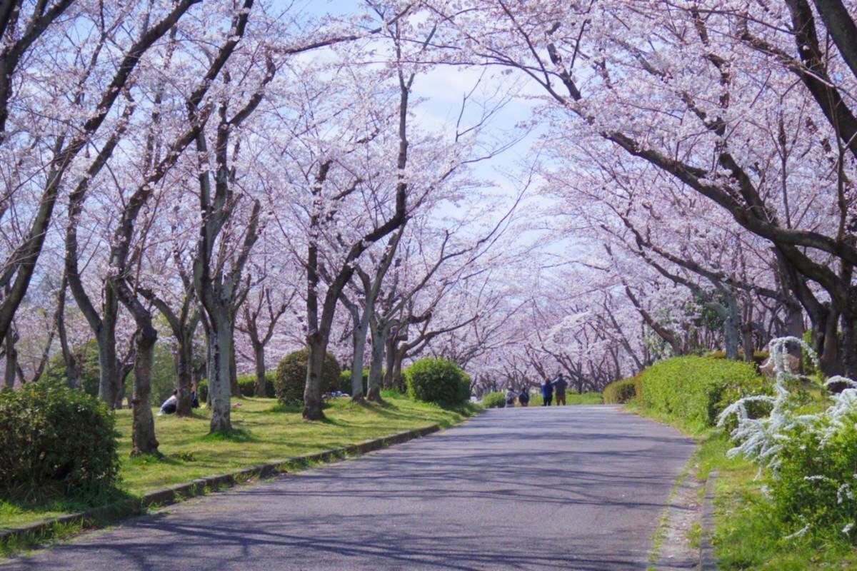 f:id:fugu-ya:20190412105907j:image