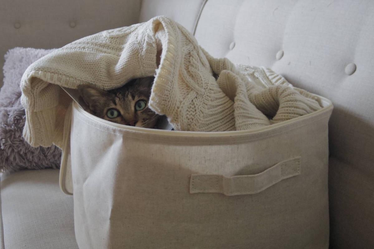 無印良品のソフトボックスに入るキジトラ猫