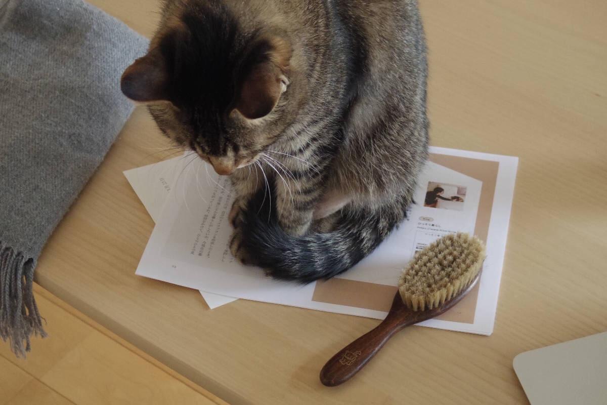 書類の上に座り、ブラッシング要求のため飼い主に頭を向ける飼い猫