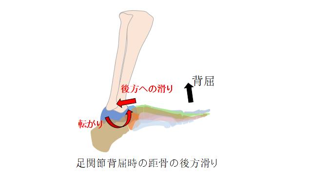 距骨の後方滑り