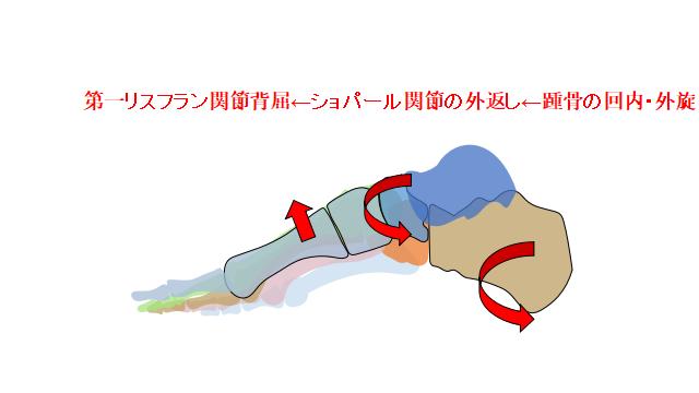 足部 運動連鎖