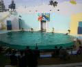 イルカショー水族館