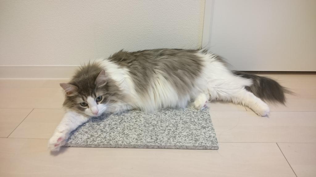 大理石と猫