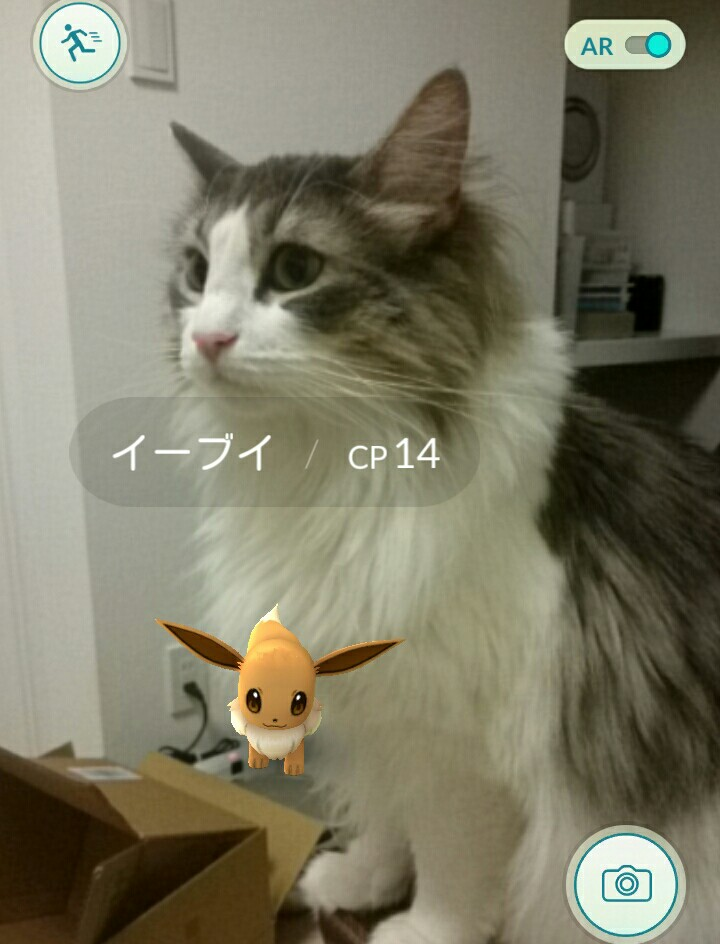 PokemonGOイーブイと猫