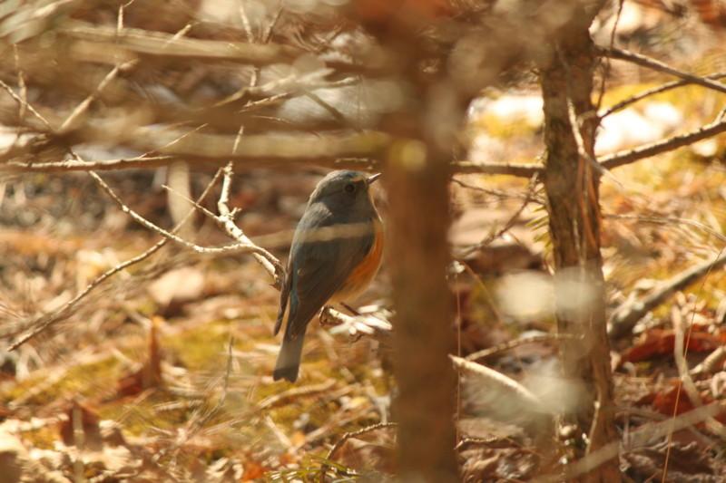 f:id:fujien:20120118115411j:image:w360